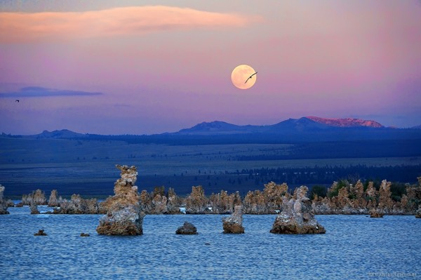 Mono Lake Moonrise sm